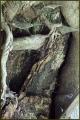 Nejstarší lípa na Sv.Anně